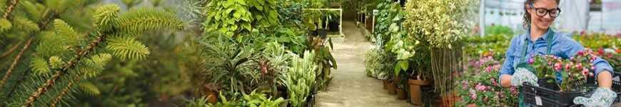 Compra Plantas, Arbustos y Árboles de exterior online | soydecampo.com